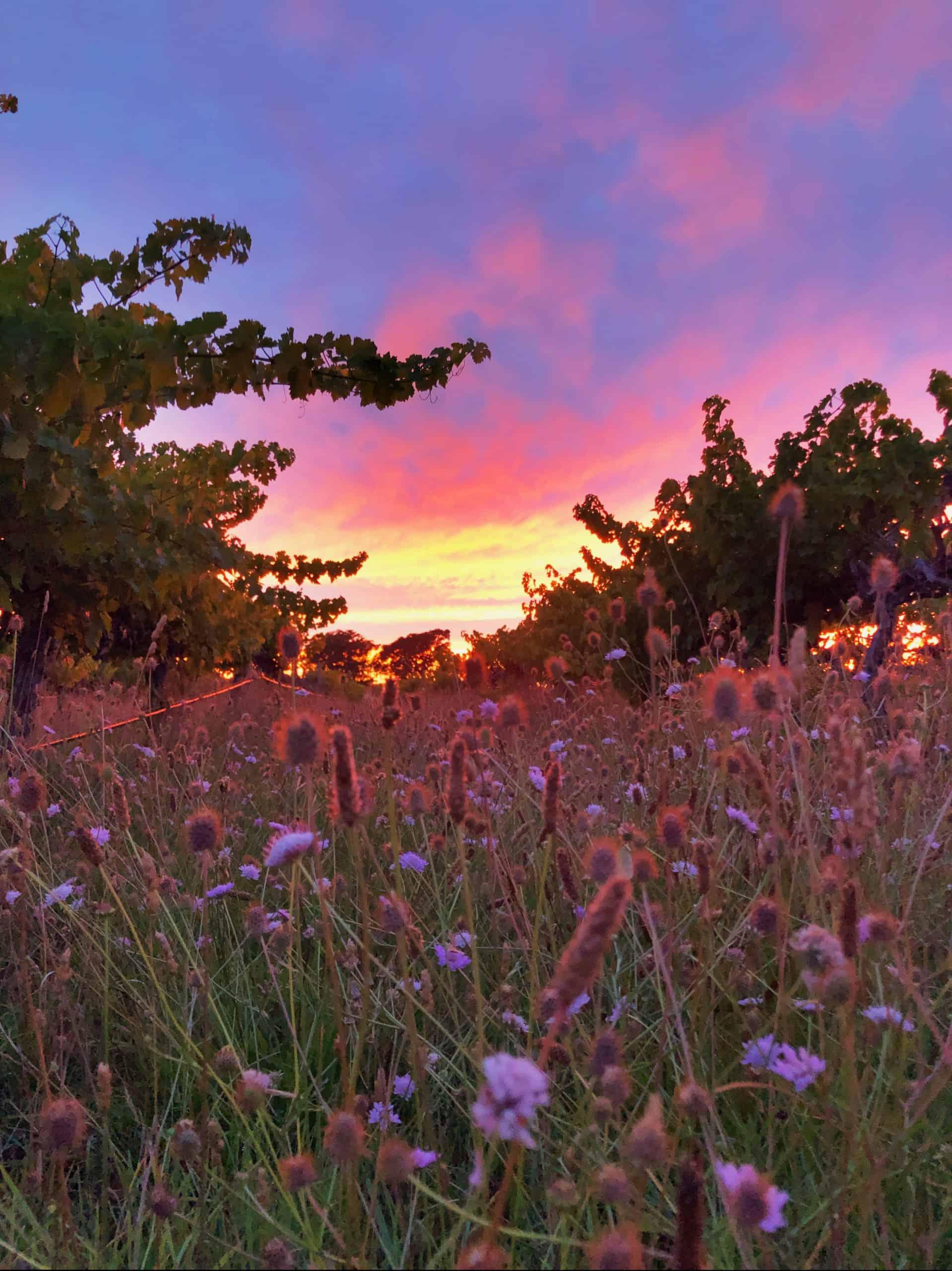 koonara vineyards